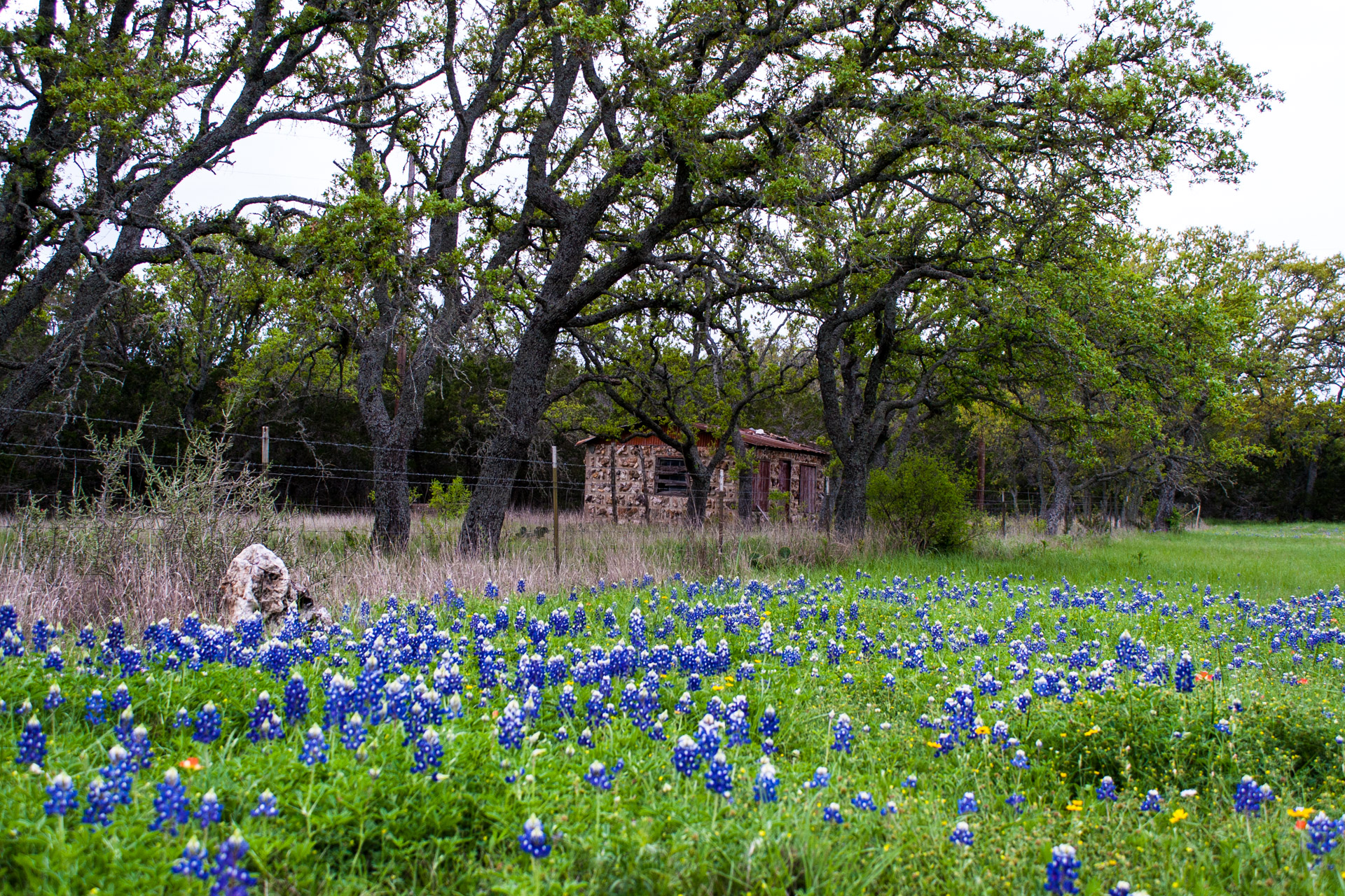 Burnet, Texas - A Red Stone Cottage With Bluebonnets (side far)