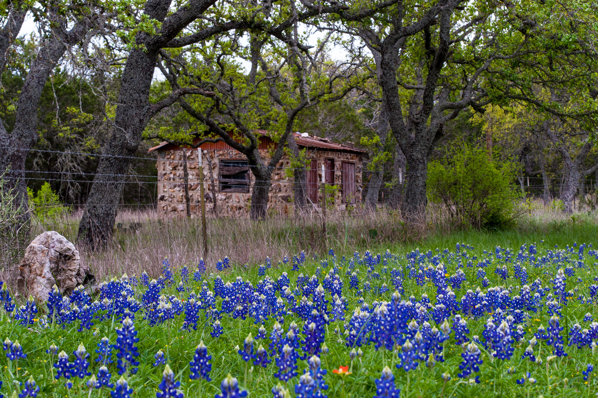 Burnet, Texas - A Red Stone Cottage With Bluebonnets