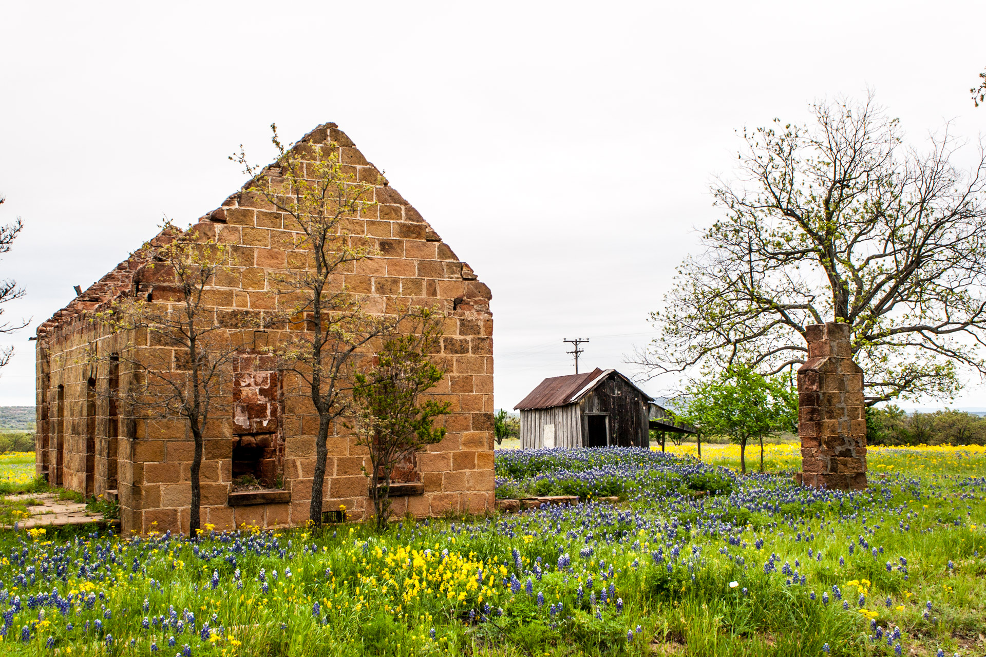Pontotoc, Texas - A Stone Ruin With Bluebonnets (angle left)