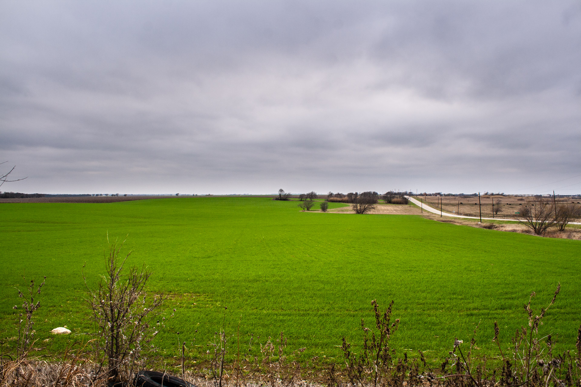 Bright Green Texas Farmland + Friday Link Love