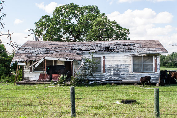Marquez, Texas - Cow House