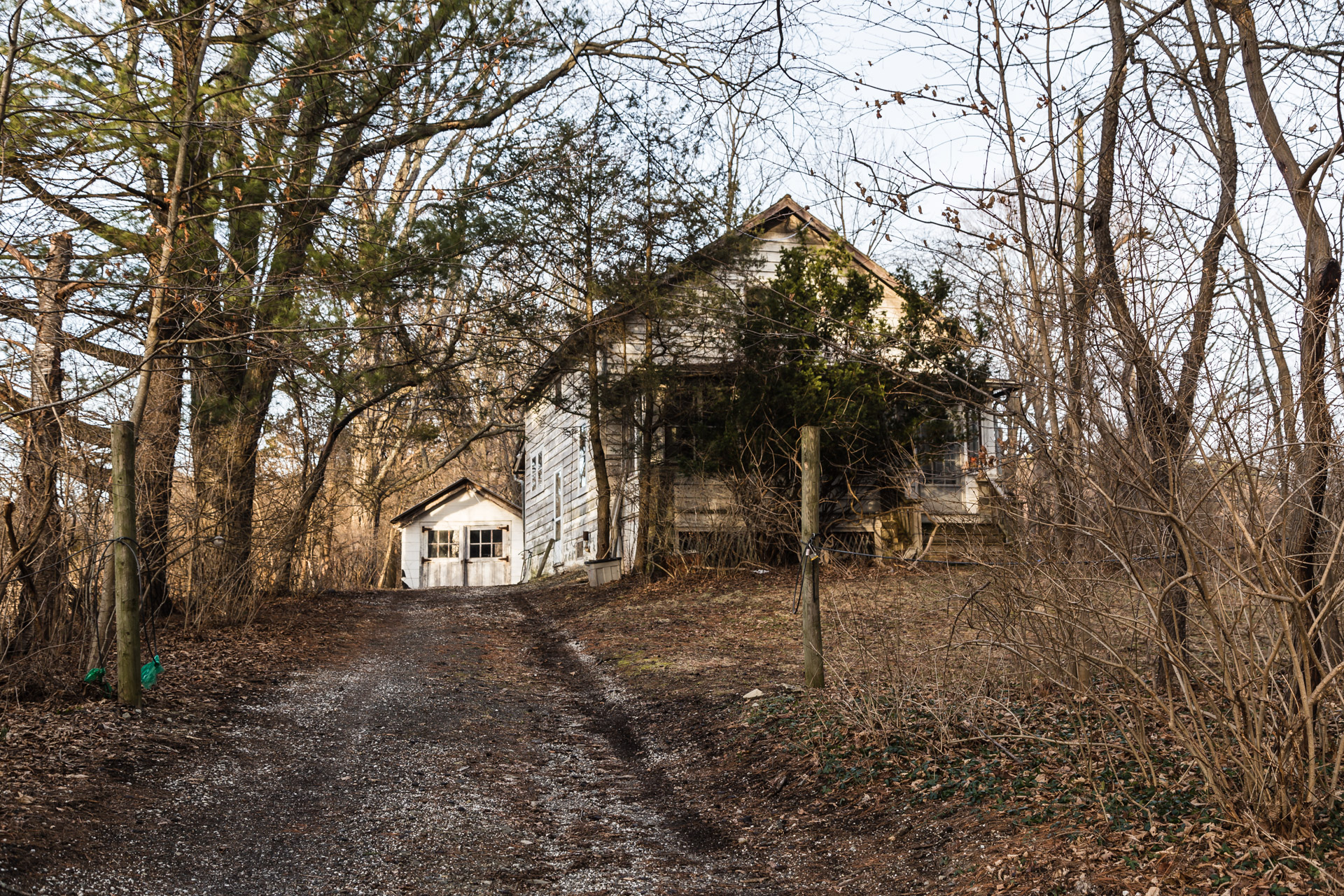Fredon Township, New Jersey - Invading Tree House