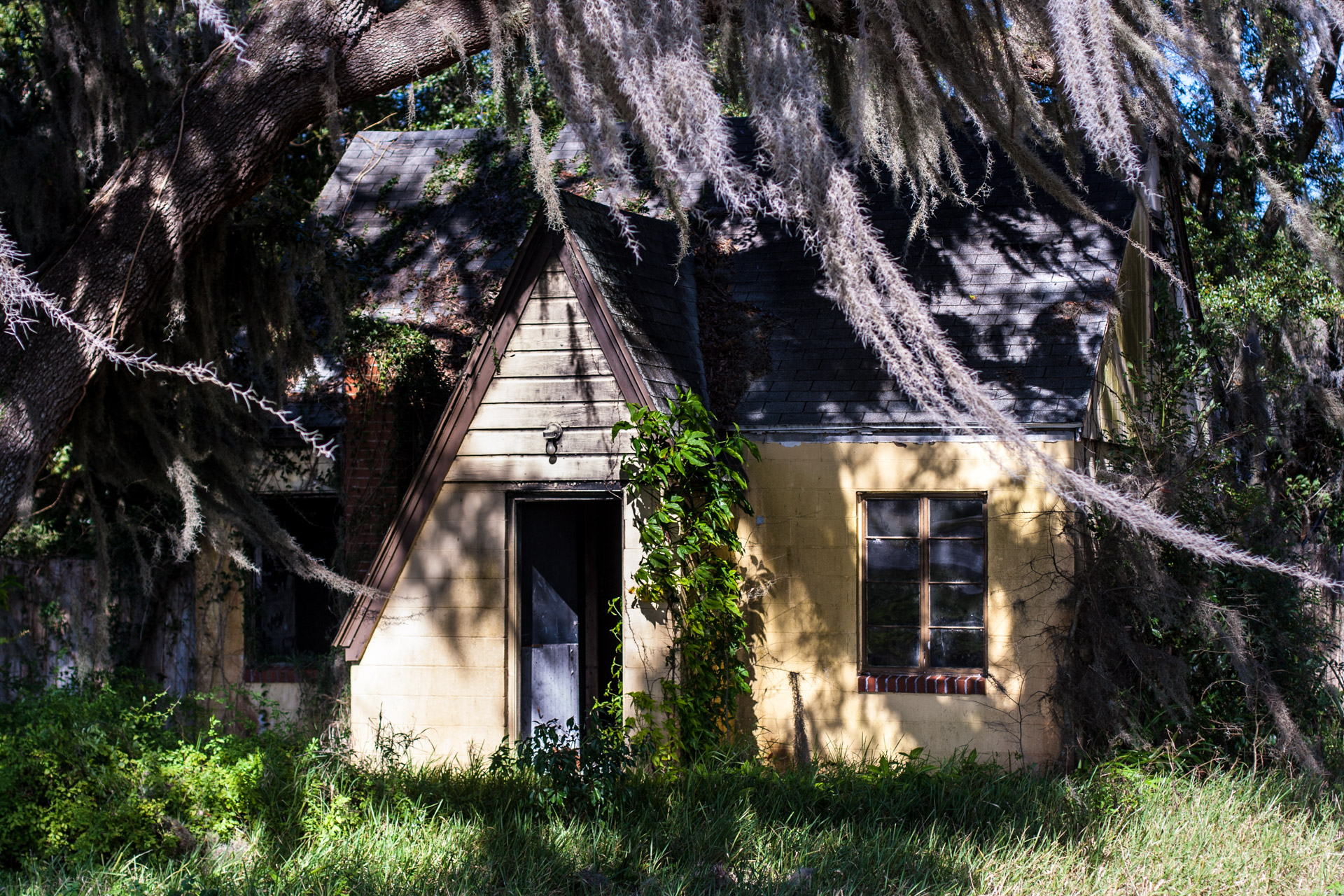 Leesburg, Florida - Wispy Tree House (front close)