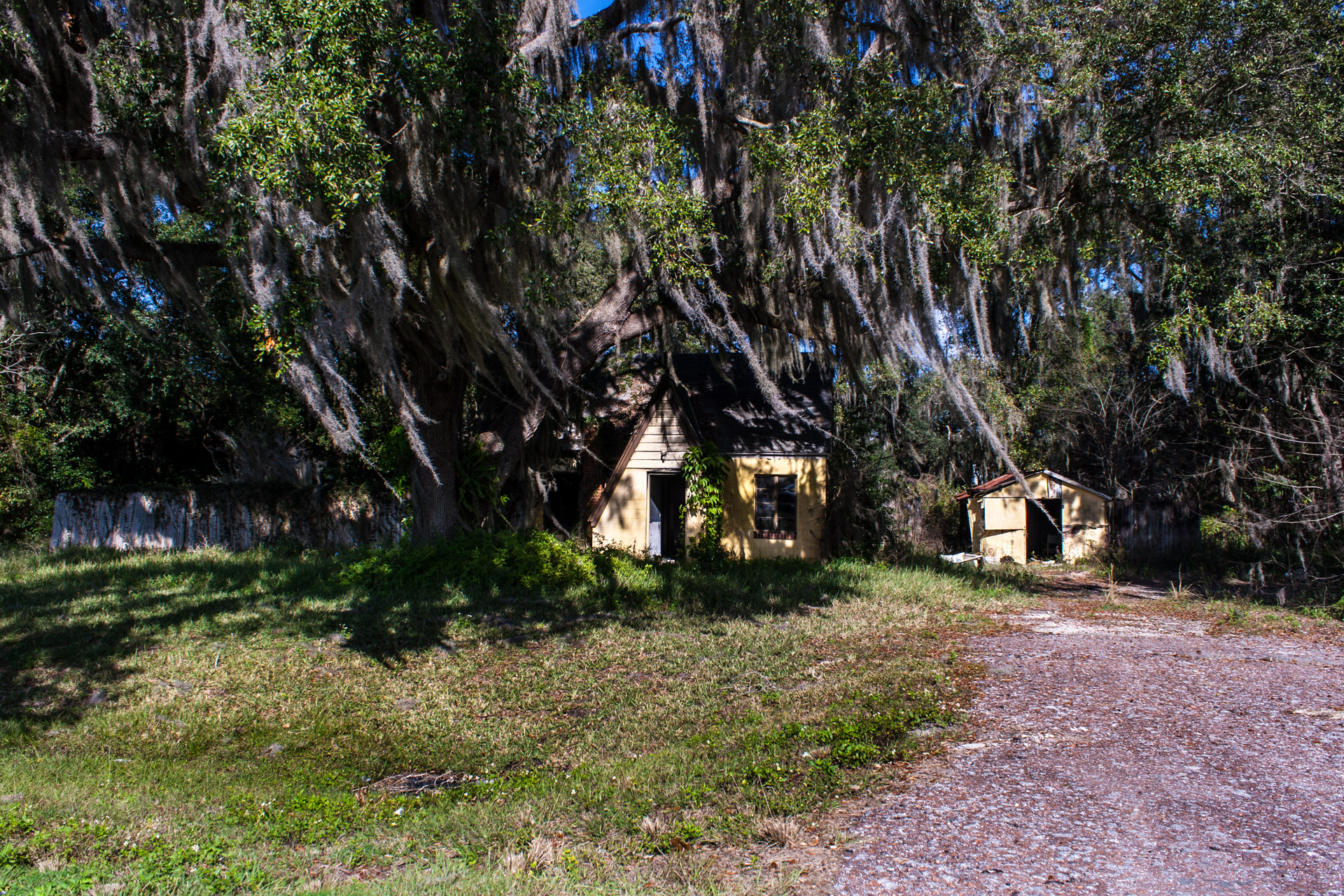 Leesburg, Florida - Wispy Tree House (front far)