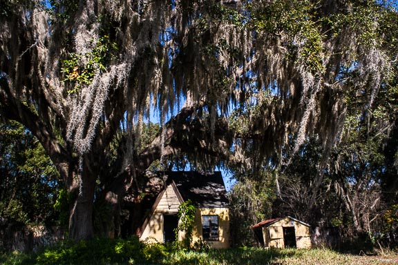 Leesburg, Florida - Wispy Tree House