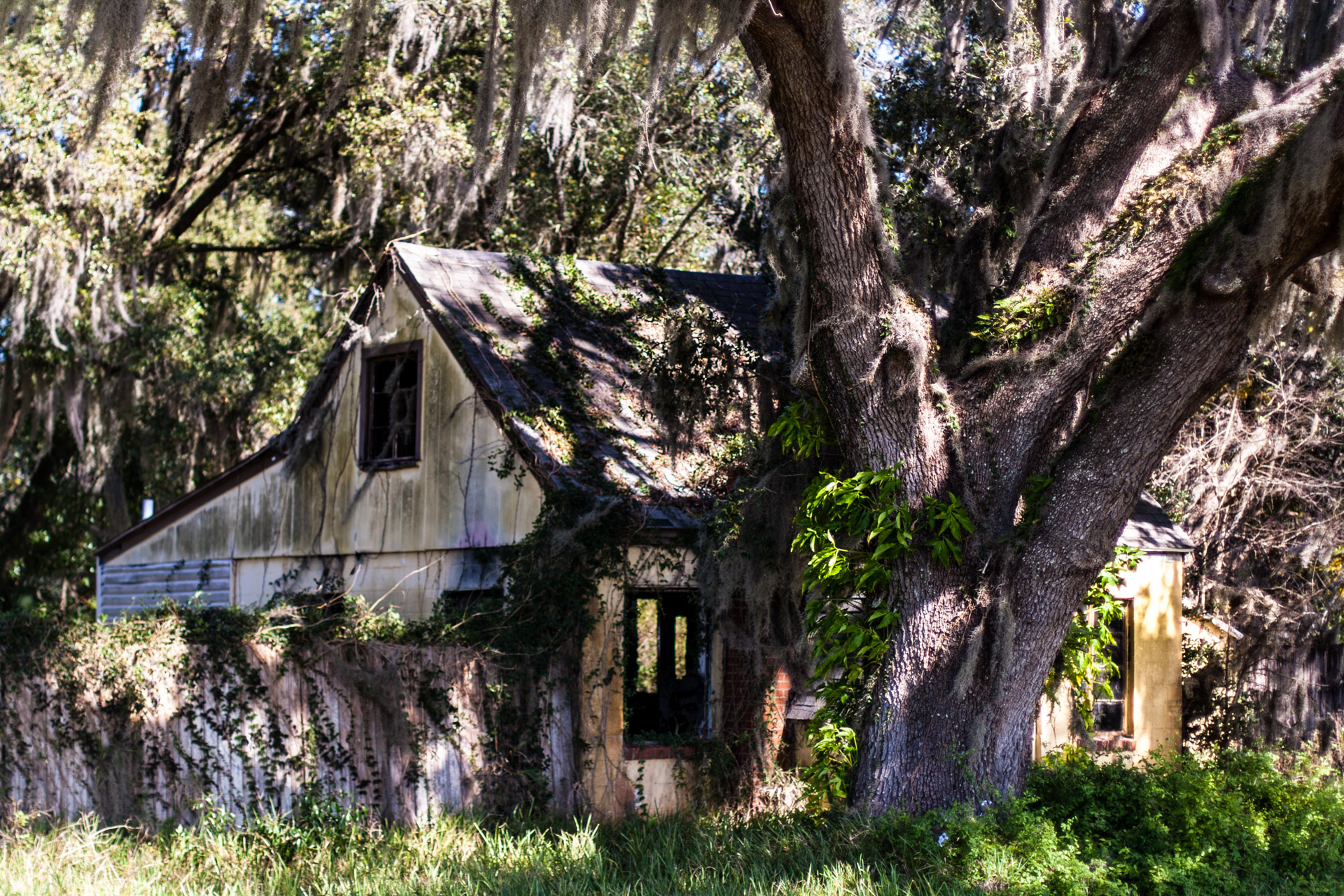 Leesburg, Florida - Wispy Tree House (side close)