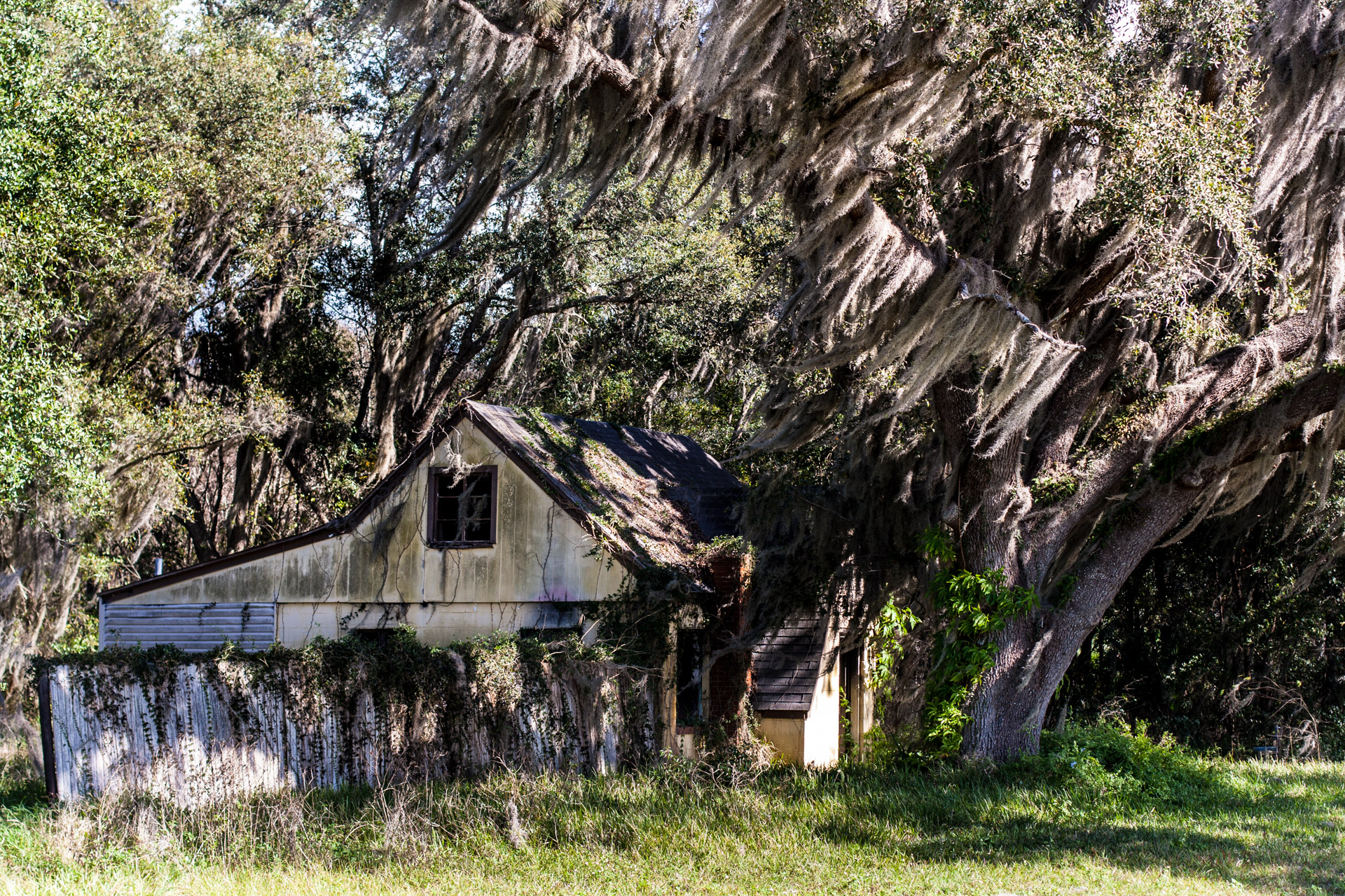 Leesburg, Florida - Wispy Tree House (side far)
