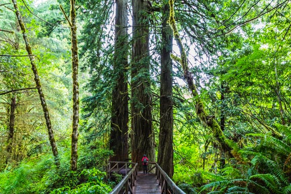 Redwood National and State Parks Part 1