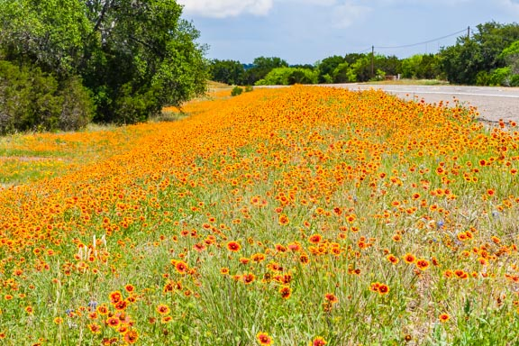 Flashback Trip: Texas Wildflowers